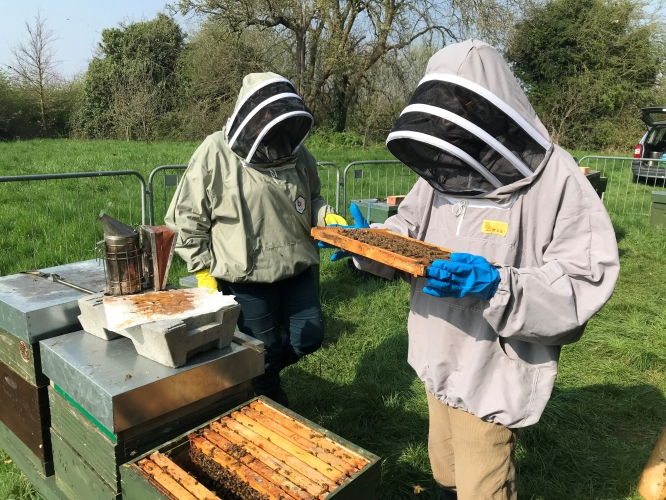 Crazy 2020 beekeeping season