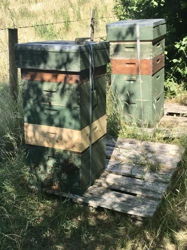 COVID beekeeping season 2020